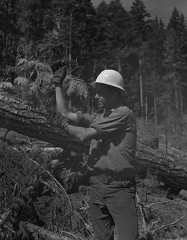 Logging, 1967; a man wearing a hard hat standing in a logging area and holding his arms up