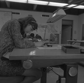Map drafting, Victoria, 1968; woman sitting at a desk drafting a map