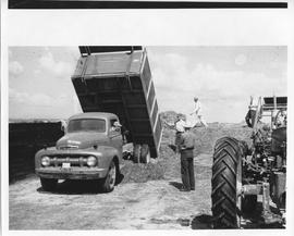 Agriculture; men working on a farm, a truck dumping harvested wheat