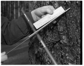 Forestry Technology - 1967, taking core sample from tree, hands, ruler