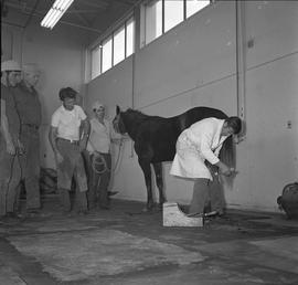BC Vocational School Farrier Training ; instructor placing horseshoe on a horse's hoof while stud...
