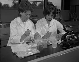 Medical Lab; two women in lab coats sitting at a desk setting up an antibody investigation using ...