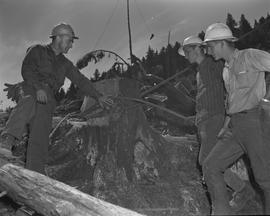 Logging, 1967; three men in hard hats looking at a tree stump wrapped with metal cables