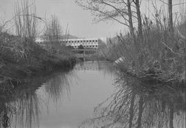 Guichon Creek; two ducks swimming; building in background
