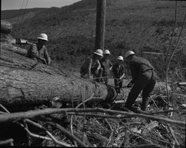 Logging, 1967; man tightening lifting cables around a log and a group of men watching