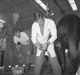 BC Vocational School Farrier Training ; instructor demonstrating how to trim a hoof
