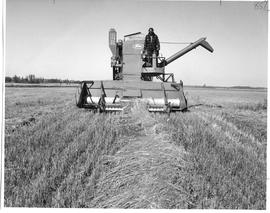 Agriculture; man operating a combine harvester(?) in a wheat field