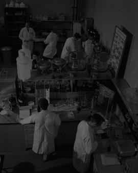 Forest Products, 1966; men in lab coats working in a lab [2 of 2]