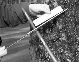 BCIT Programs Forestry Technology ; a person holding an instrument to take core samples from a tr...