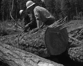 Logging, 1967; two men wearing hard hats putting lifting cables around logs