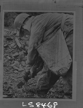 Logging, 1968; copy negative; picture of a person planting a sapling