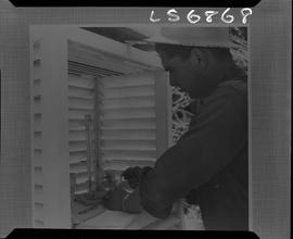 Logging, 1968; copy negative; picture of a man wearing a hard hat looking at a thermometer