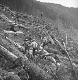 Logging, 1969; men working in a logging area