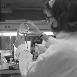 Medical laboratory technology, 1968; student, Heather Hart, examining culture for growth in an ar...