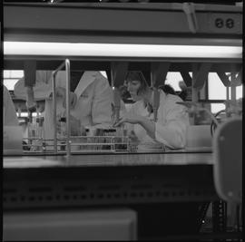 Medical laboratory technology, 1968; students working in a medical lab [2 of 11]