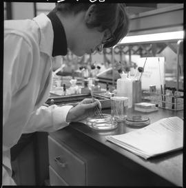 Medical laboratory technology, 1968; student, Barbra Fitch, placing sensitivity disc to determine...